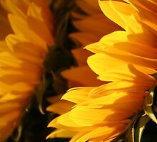 Beaming Sunflowers by Terri~Lynn Bealle