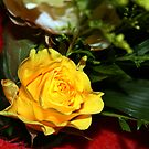 The yellow rose by Christian  Zammit