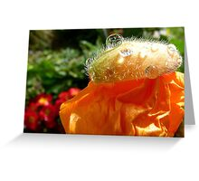 The Shower Cap - Orange Poppy - NZ - Southland Greeting Card