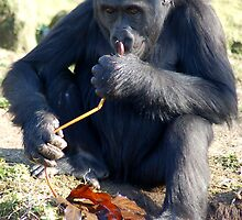Sniffing the Stalk by ApeArt