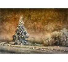 Winter Wonder Photographic Print