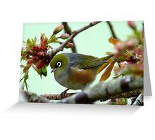 Blending in! - Silvereye - NZ - Southland Greeting Card