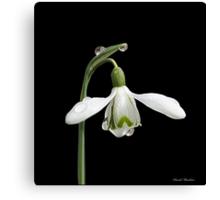 Diamond Flower Canvas Print