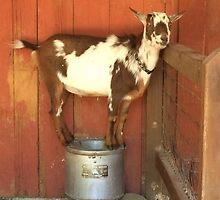 Goofy Goat by Hickoryhill