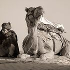 The Camel Driver by Heather Prince