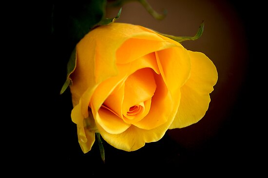 ONE YELLOW ROSE by Paul Quixote Alleyne
