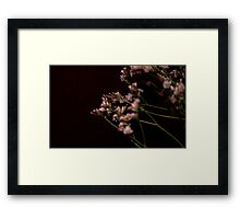 0199 - HDR Panorama - Dried Flowers 2 Framed Print