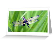 Dragonfly with Bumble Bee markings - Laguna Whitsundays Greeting Card