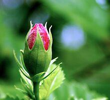 About to bloom - Laguna Whitsundays by JenniferW