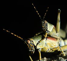 Mating Grasshoppers by Gerry Van der Walt