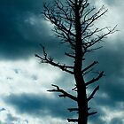 Lonely Tree by deahna