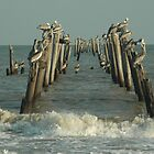 Brown Pelicans by ClintDMc