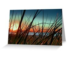Sunset Grass. Greeting Card