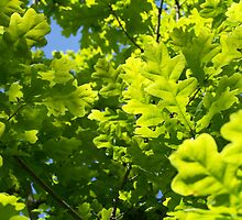 Green Leaves by gregrob1
