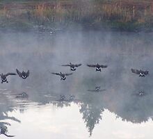 Canadians are landing... by LindaR