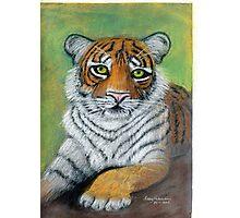 Tiger paw Photographic Print