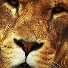 Lions Face by nayamina