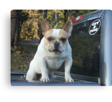 Git-R-Done Frenchie Canvas Print