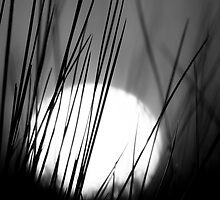 Behind the Reeds in Mono by Jonicool