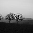 Solitude. by Marc Bruno Schroth