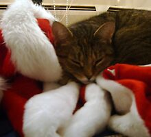 winters cat nap by DIANE KLEVECKA