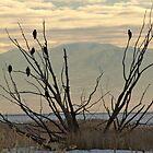 Family Perch by loriclint