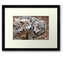 Buddy your just not getting the message!!! Framed Print