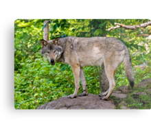 Forest Guardian 3 Metal Print