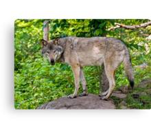 Forest Guardian 3 Canvas Print