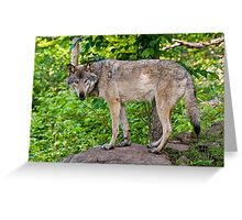 Forest Guardian 3 Greeting Card