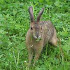 Bunny Call by Martha Medford