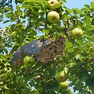 .....and a part  ridge in a pear tree by Susan Littlefield