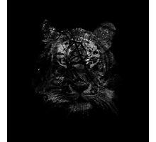 Tiger 6 Photographic Print