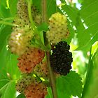 mulberries by kveta