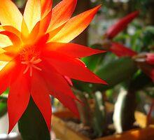 orange star by kveta