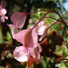 in pink by kveta