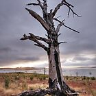 Tree at Lake Ecumbene by Christopher Meder