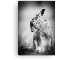 Dark Hare Canvas Print