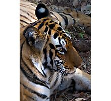 Bengal Tiger Photographic Print