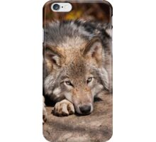 Timber Wolf At Rest iPhone Case/Skin