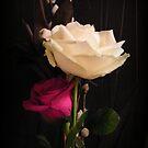 Roses on black by ElsT