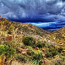 Storm Brewing  by Roger Passman