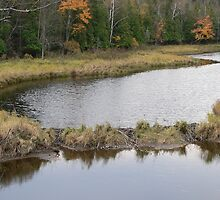 Beaver Dam by kevint
