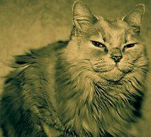Fluff Cat Dutone 2 by wetdryvac
