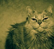 Fluff Cat Dutone 3 by wetdryvac