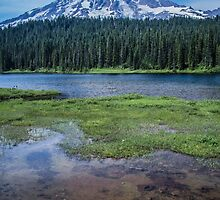 Mount Rainier View from Reflection Lakes by Nicole Petegorsky