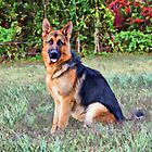 Handsome Albert by Sandy Keeton
