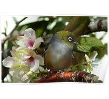 Oh dear! I think Iv'e been left at the Alter! - Silvereye - NZ Poster