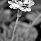 B&W Flower Photography #3 by Jessica Slater