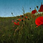 Poppies by Anette Tyler